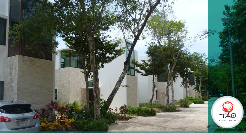 Cleaning the common areas and replanting trees, plants and flowers