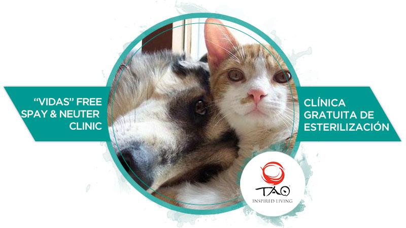 """Vidas"" Free Spray & Neuter Clinic for Dogs & Cats"