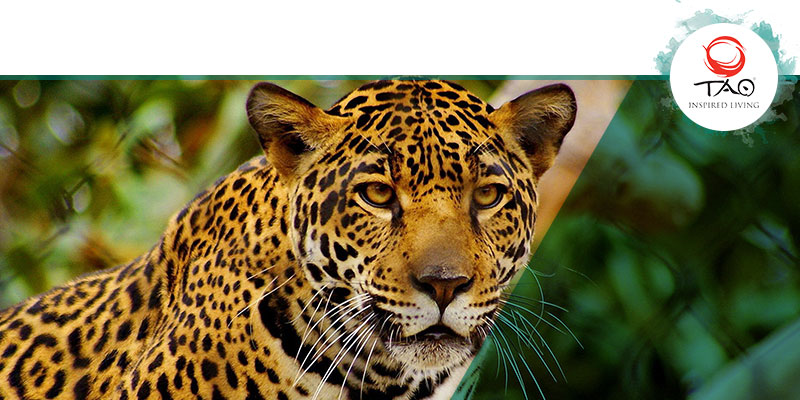 There are 2,584 Endangered Species in Mexico
