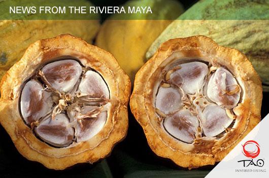 NEWS from the Riviera Maya: