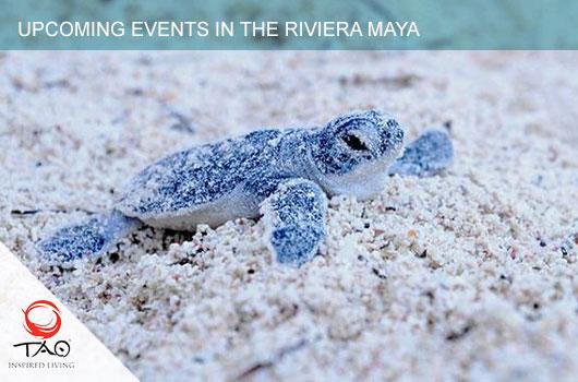 Sea Turtle Season, Cozumel