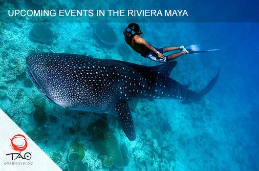 Whale Shark Tour, Isla Mujeres