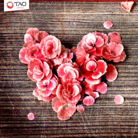 Valentine's Day - Día del Amor y la Amistad
