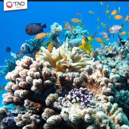 USD$6.5 million underwater museum planned for Playa del Carmen