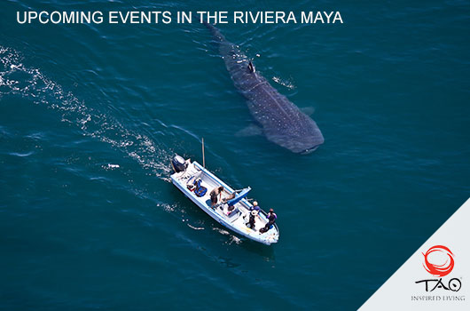 Whale Shark Tour, Isla Mujeres (TBA)