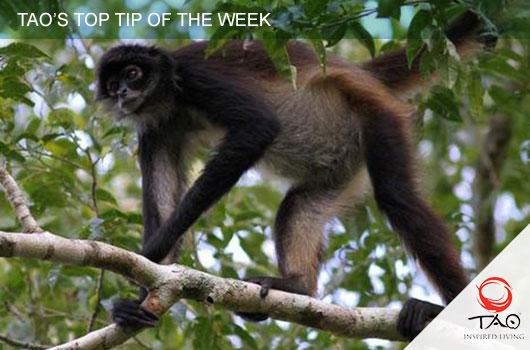 The Jungle Place – Spider Monkey Sanctuary