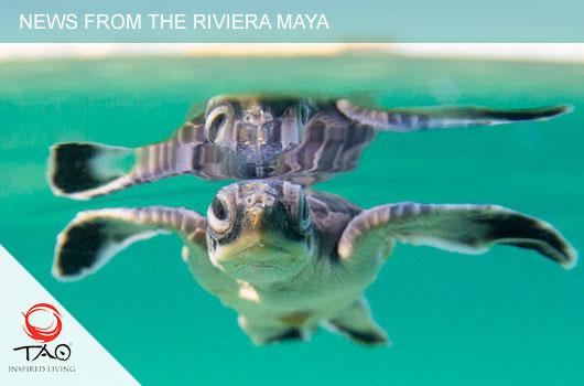 Turtle Season So Far… A FEW REMINDERS FOR NESTING/HATCHING SEASON